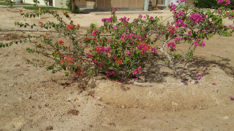 Nice to see colour in the midst of beige sand and the greenery.